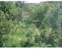 """Дача, кооператив """" Залісся"""", с. Чапаєвка, 20 км. від м. Черкаси."""
